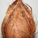 Whole mature coconut