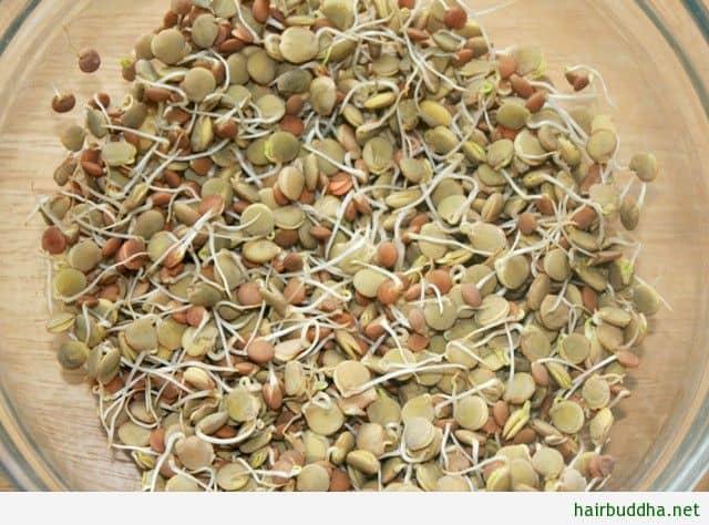Green lentils1