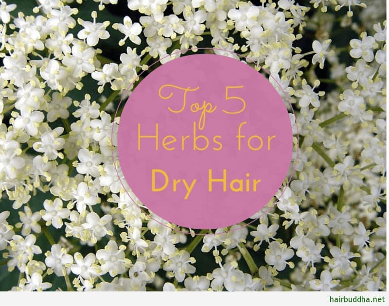 Top 5 Herbs For Dry Hair1