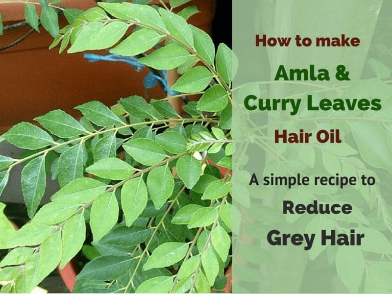 How to make amla & curry leaf oil4