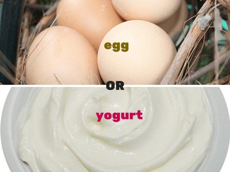 egg or yogurt1