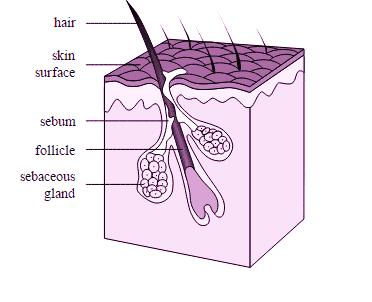 hair ffff (3)