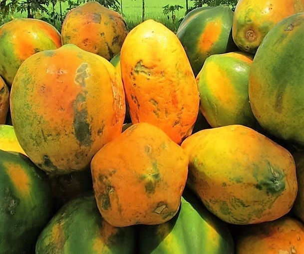 papaya-331273_640 (2)
