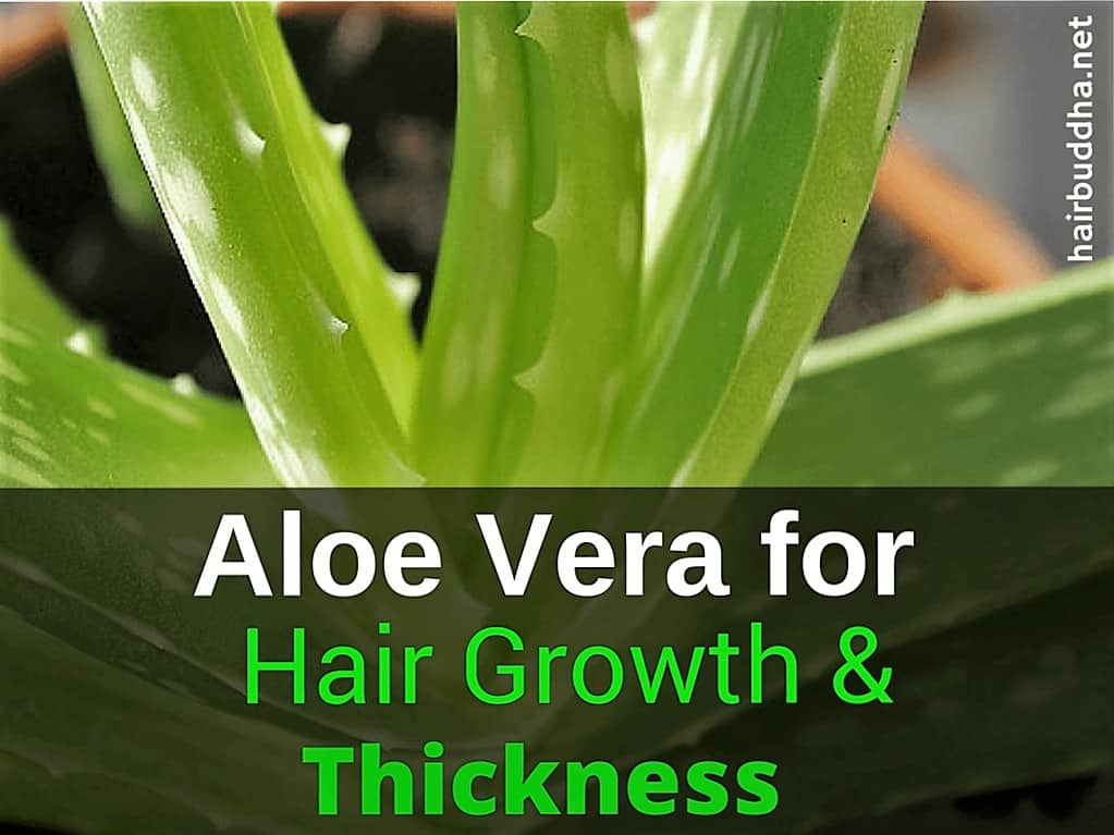 Aloe vera for hair growth & thickness