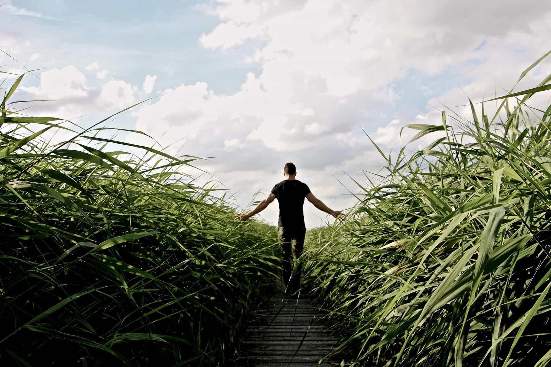 high-grass