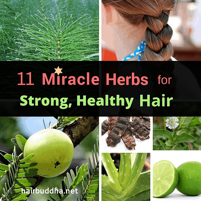 11 Miracle Herbs for Strong, Healthy Hair - hair buddha
