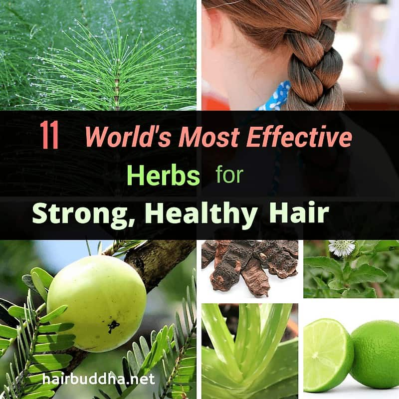 most effective herbs for hair