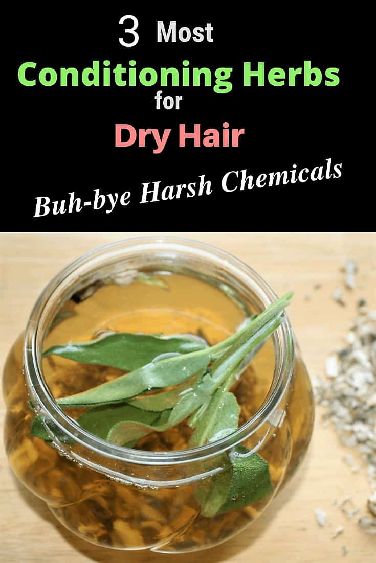 conditioning herbs for dry hair