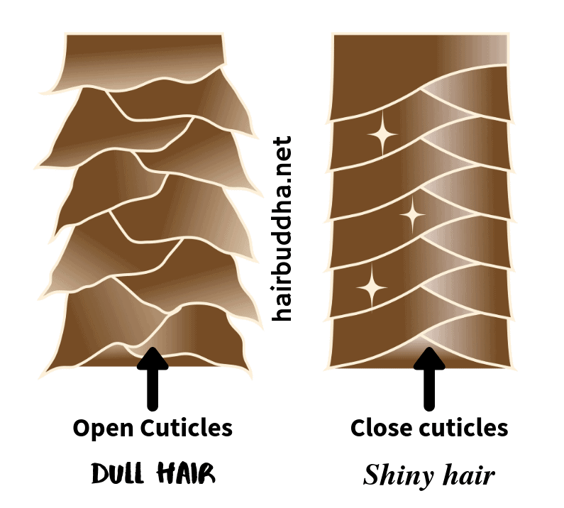 Close hair cuticles make hair shiny