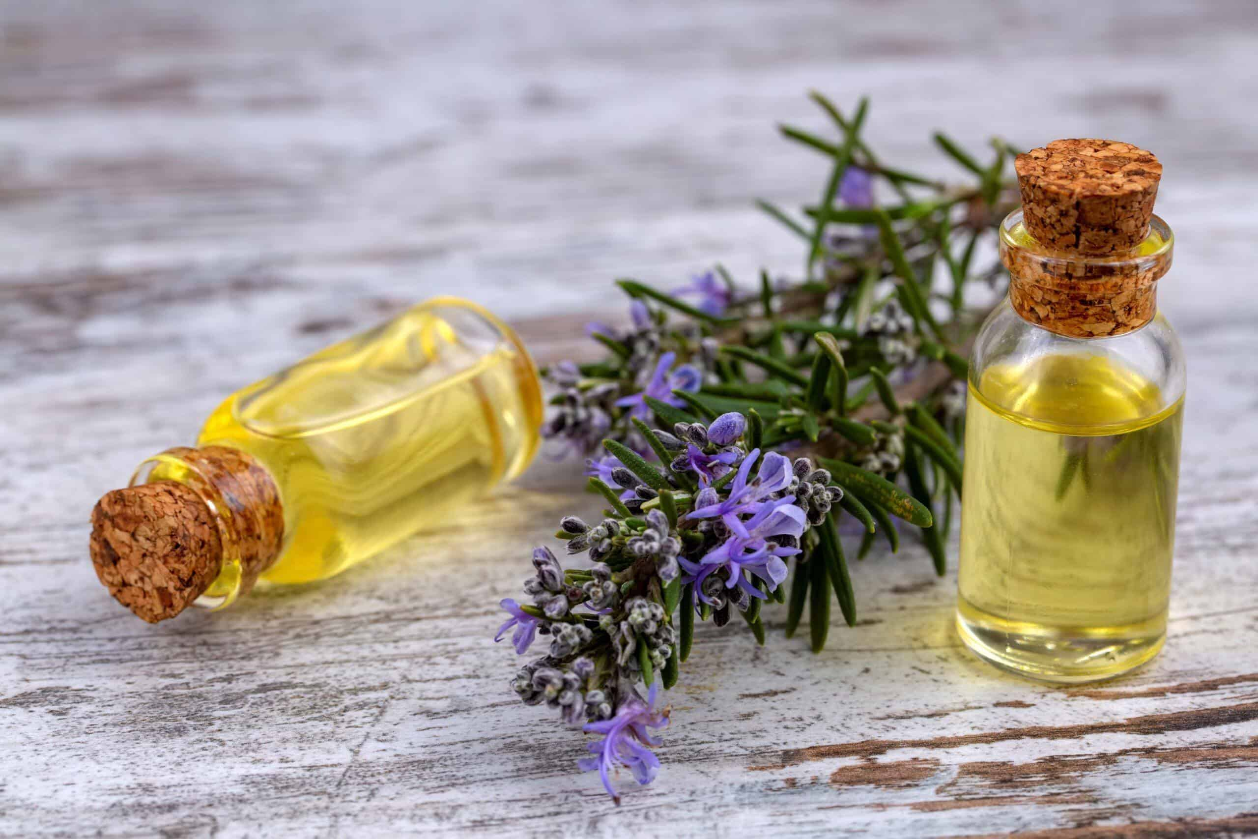 Why Use Rosemary Oil For Hair Growth Helps With Androgenic Alopecia Hair Buddha